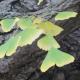 Die Heilkraft des Ginkgo Baumes